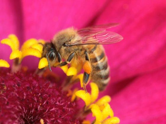 nectar recettes au miel du domaine apicole de chezelles. Black Bedroom Furniture Sets. Home Design Ideas
