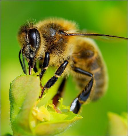 de l eau pour nos abeilles recettes au miel du domaine apicole de chezelles. Black Bedroom Furniture Sets. Home Design Ideas