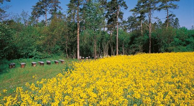 champs de pollen