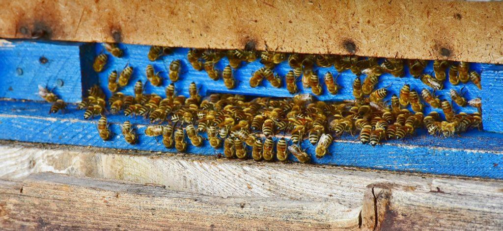 comment les abeilles fabriquent le miel. Black Bedroom Furniture Sets. Home Design Ideas
