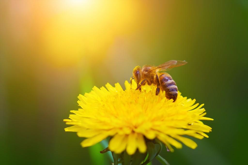 Domaine apicole de Chezelles
