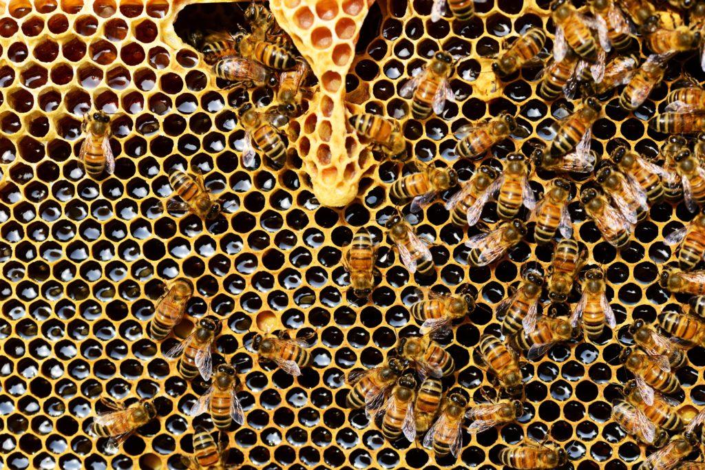 miel et organisme