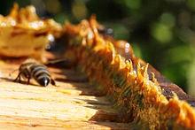propolis et abeilles