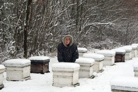 Paulette dans les ruches en hiver au Domaine Apicole de Chezelles
