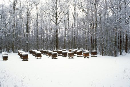 Ruches sous la neige au Domaine Apicole de Chezelles