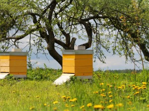 Wooden beehives in the garde