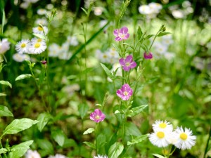 Green Grass with Pink and White Flowers